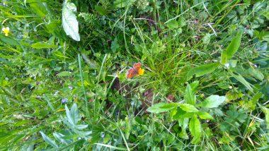 Šentjurski prvošolci raziskujejo travnik