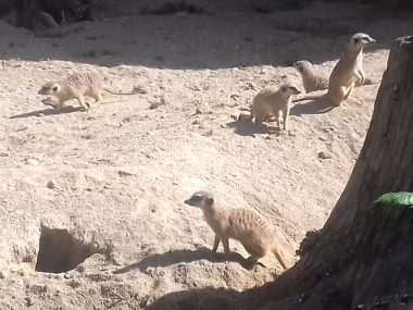 Žalski prvošolci v živalskem vrtu