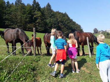 Žalski tretješolci na kmetiji
