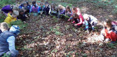 Raziskovanje gozda z vsemi čutili